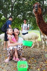 2014-09-07 10.51.53 (pang yu liu) Tags: ranch travel animal festival daily 09 sep chiayi  midautumn    2014