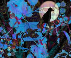 The Crow Night (virtually_supine) Tags: kreativepeopletreatthis152 sourceimagefractalfeathersbyabstractartangel77 fractal kaleidoscopes night fullmoon nightlights crows vivid atouchoffantasy vividcolour photomanipulation creative digitalartwork layers textures expressionist blues photoshopelements13mac kaleidofx2