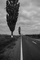 DSC_0183 (Kaigara Online) Tags: enisala cetate capul dolosman bw clouds water reflections trees fields romania tulcea jurilovca birds cows sheep cross cinema gods ruins arganum citadel medieval