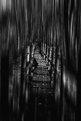 IMG_1818_1sv (Robert Björkén (Hobbyfotograf)) Tags: bw blackandwhite art monochrome depth goth gothic mystic artistic 35mm