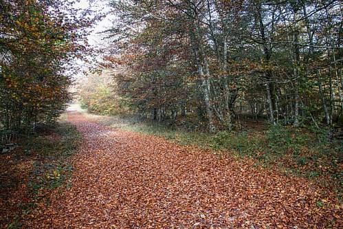 #caminos #bosque #hayas #hayedo #montesantiago #naturaleza #bucólico #photography #arboles ##photos fotos #burgos