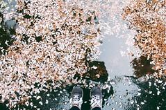 Rima Dadenji, shadow selfie, 2014 (Rima Dadenji) Tags: shadow shadowselfie spring petals hanami pink nature nikond90 nikon composition water reflection waterreflection beauty rimadadenji impressionism