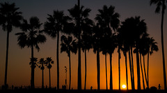 Venice Beach (MyEyeSoul) Tags: sunset venicebeach palm trees beach yello silouhete california golden myeyesoul feelgood warm fuzzy yellow orange red nature palms