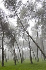 IMG_8311 (Juan Manuel Sanchez) Tags: otoo adrianospicture juanmanuelsanchez hojas arce rojo niebla fog campo montaa madrid espaa canon d60 naturaleza maana cielo silueta contraluz cesped hierba bosque norte