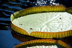 Chicago - Botanic Garden IV (FerencSeitz) Tags: ferencseitzphotography chicagobotanicgarden nikon nikor d800e