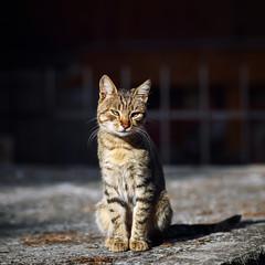 Street cat 172 (Yalitas) Tags: cat cats    kedi chat feline kat katze katzen kot kotka pet felino kottur katte kass kitty gato kocka gatta katzchen canon streetcat