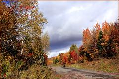 Nostalgie--( I miss you, Chanel) (Huguette T.) Tags: sentier path arbres trees couleurs automne nature