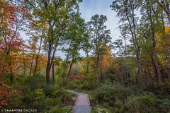 Entering Spring Run Trail (Samantha Decker) Tags: canonef1635mmf28liiusm canoneos6d ny newyork samanthadecker saratogasprings springruntrail autumn fall upstate