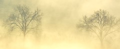 Earth Lungs (Frances Corbett) Tags: gers mistymorning france treesinfog treesinmist gascony lasauvetat trees