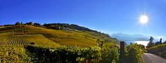 Lavaux en automne (Diegojack) Tags: automne couleurs lavaux brillance lac lman routes vignes vignoble monteiller panorama