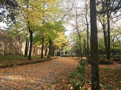 Ode all'autunno (Elena Scortecci) Tags: ode autunno autumn fall foglie leaf nofilter brown marrone parco park italia italy arezzo giallo verde yellow green tree albero