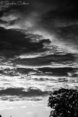 ciel de soiree n&b (La photo & moi....) Tags: ciel crpuscule nuageux nuages noir et blanc nb monocrome