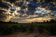 Carcassonne -041 (bonacherajf) Tags: carcassonne sunset coucherdesoleil citmdivale remparts vignes
