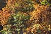 Autumn (Sareni) Tags: sareni slovenia slovenija maribor mb mestnipark park citypark branches granje leaf leaves list lisce colors boje light svetlost autumncolors fall autumn jesen october 2010 twop