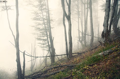 18 Dry Mountain Fog (kana movana) Tags: dry mountain serbia balkan forest tree fog foggy weather fall autumn mountaineering walk tracking nature outdoor travel journey climbing d90