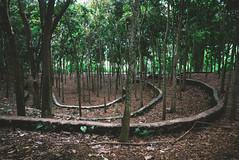 P1050257-Edit (F A C E B O O K . C O M / S O L E P H O T O) Tags: bali ubud tabanan villakeong warung indonesia jimbaran friendcation