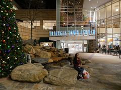 20161210_180401_37_rdl.jpg (radialmonster) Tags: christmastree triangetowncenter sheila radialmonster raleigh northcarolina unitedstates us