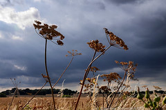 Day #3131 (cazphoto.co.uk) Tags: panasonic lumix dmcgh3 panasonic1235mmf28lumixgxvarioasphpowerois project366 beyond2922 270716 seedpods stormclouds clouds sky noakbridge essex