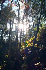 Troodos Geopark (22) (Polis Poliviou) Tags: polispoliviou polis poliviou   cyprus cyprustheallyearroundisland cyprusinyourheart yearroundisland zypern republicofcyprus  cipro  chypre   chipir chipre  kipras ciprus cypr  cypern kypr  sayprus kypros polispoliviou2016 troodosgeopark troodos mediterranean nicosia valley life nature forest historical park trekking hiking winter walking pine pines prodromos limassol paphos fall autumn geopark kakopetria