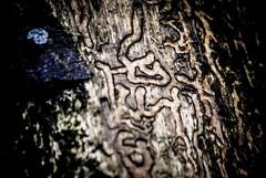 Hieroglyphics (Mr. Loeding) Tags: nature wood black brown grey blue exposure dark white wet rain forest foreign language light tree twilight nikon dslr photo green darkness makro amazing art reflection outdoor outside