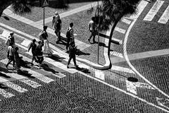 A spasso sui sanpietrini (luporosso) Tags: roma rome italia italy street strada strisce bianconero biancoenero blackwhite blackandwhite blancoynegro noiretblanc monochrome monocromatico monocromo allaperto sanpietro sanpietrini