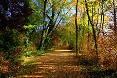 Walking between colors (annalisabianchetti) Tags: colors autunno autumn trees alberi natura path sentiero fall leaves light italy paesaggio landscape