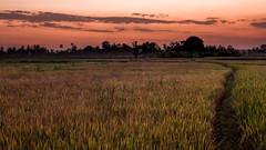 27082013-IMG_6784 (christophecavelli) Tags: landscape nature bali travel