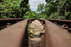 What's Left of the Railway Track (cstreetwalker) Tags: outdoor bukit timah singapore railway track forest trains
