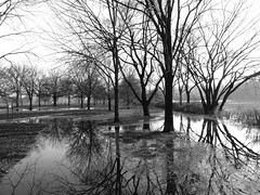 Flooded paths (Dendroica cerulea) Tags: flood flooding water tree trees reflection river landscape blackandwhite bw monochrome autumn donaldsonpark highlandpark middlesexcounty nj newjersey fav10 fav20 fav30 fav40 fav50 fav60 fav70 fav80 fav90 fav100 fav110 fav120 fav130 fav140 fav150 fav160 fav170 fav180 fav190 fav200 fav210 fav220 fav230 fav240 fav250 fav260 fav270 fav280 fav290 fav300