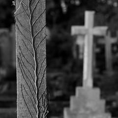 Tree of life (Andrew Malbon) Tags: leica leicam9 m9 90mmf2 summicron graves death monochrome
