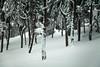 winter love (Rajkosk8) Tags: rajkosk8 serbia montenegro crna gora srbija pejzaz landscape mountain snow sneg planina rajko radosavljevic