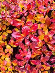 Last of the fall color ((Jessica)) Tags: autumn boston leaves massachusetts newengland fall seasonal seasons season red colorful procam