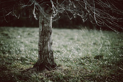 tree in field (J_W_C) Tags: moody simulatedfilm reallyniceimages tree field contrast grass nature stark backlight