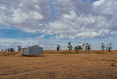 The Old Shearing Shed. (Ian M's) Tags: shed landscape vsco