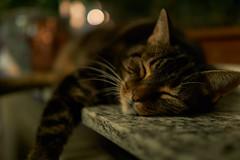 sleepy (_Callisto_) Tags: sony a6000 ilce6000 sigma contemporary kater cat fensterbank windowsill faul lazy gemtlich cozy haustier pet warm