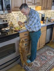 Cooking with my buddy Elsie - En la cocina con mi amiguita Elsie (A.Davey) Tags: orangecat elsie rescuecat oregoncat
