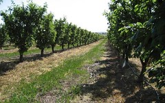 Ventnor Orchard, Kingsvale NSW