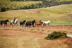 horses (J.K.E.B Elena B) Tags: sky horses patagonia mountains southamerica nature nationalpark nikon wildlife natureza roadtrip torresdelpaine montañas sudamerica chlile