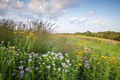 Prairie Kame (baldwinm16) Tags: sunset summer nature illinois midwest july il wildflowers prairie blackwellforestpreserve kame glacialdeposit illinoisforestpreserve natureofthingsphotography