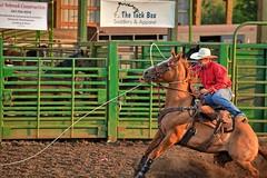 Whoa Nelly (Kirt Edblom) Tags: horse oregon fun fairgrounds nikon cowboy fair rope entertainment wife rodeo cowgirl corvallisoregon calf horseback corvallis benton roping 2014 npra calfroping bentoncounty gaylene easyhdr nikond7100