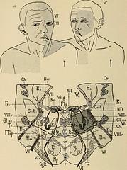 Anglų lietuvių žodynas. Žodis reticular formation reiškia reticular formavimas lietuviškai.