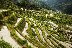 riso+acqua (ssarina124) Tags: china rice terrace guilin cina riso longsheng risaie terrazze ssarina124