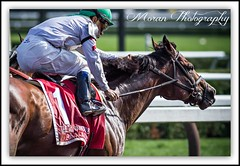 Palace (EASY GOER) Tags: summer horses horse ny newyork sports racetrack race canon athletics track photos saratoga competition upstate running racing historic event 7d athletes races sporting spa thoroughbred equine thoroughbreds compete sportofkings