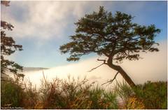 Fog Tree Rosario Point (ScottElliottSmithson) Tags: mist nature beauty fog canon spectacular landscape eos washington scenery hiking hike 7d pacificnorthwest washingtonstate deceptionpass lonetree deceptionpassstatepark washingtonstateparks bowmanbay eos7d dtwpuck scottsmithson scottelliottsmithson rosariopoint