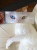 Cuki (indy138) Tags: blue white green cat hungary magnify cuki budakeszi