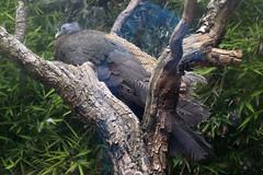 Ave Colorida (Jos Ramn de Lothlrien) Tags: horse birds animal animals fauna mexico lago caballo zoo teotihuacan flamingo lion aves jr bull paseo leon iguana pato nubes zebra animales bufalo snakes cabra tigre toro cisne iguanas reptiles vaca chiva guacamaya tigres buey ciervo tucan leones aguila ninfa faisan serpiente cebra garza venado jirafa dromedario zoologico semental cotorros tucanes producciones caribu agaporni gallinita reinoanimal cotorritos