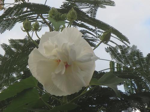 白い花もきれいです