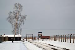 Auschwitz (011)