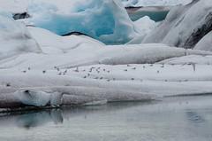 Jokusarlon : glacon-3 (elcoincoin1) Tags: lake landscape iceland glacier iceberg paysage islande jokusarlon