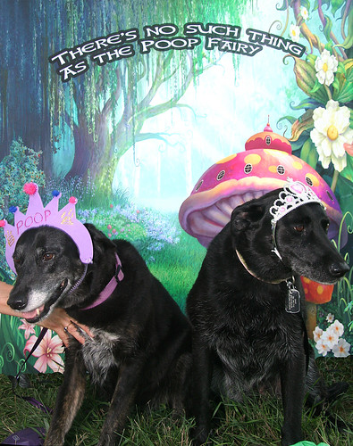 Photo - Runner Up - There is no Poop Fairy! dog photo contest
